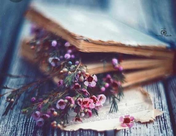 Această imagine are atributul alt gol; numele fișierului este fleurs-dans-livre.jpg