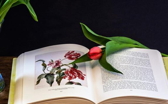 Această imagine are atributul alt gol; numele fișierului este three-tulips.jpgjpg.jpg